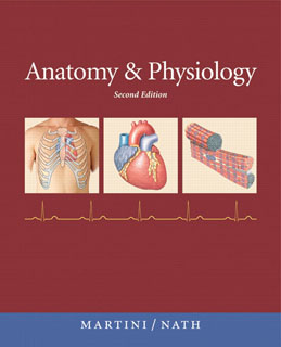 Test Bank (Downloadable Files) for Anatomy and Physiology, 2nd Edition, Martini, 0321596609, 9780321596604