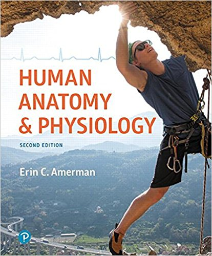 human anatomy and physiology 2nd edition test bank
