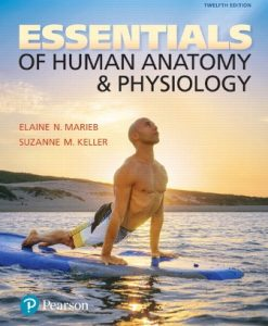 Test Bank for Essentials of Human Anatomy and Physiology 12th Edition Elaine N. Marieb