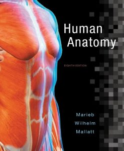 Test Bank (Downloadable Files) for Human Anatomy 8th Edition Marieb