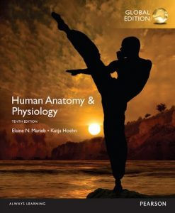 Test Bank (Downloadable Files) for Human Anatomy and Physiology Global Edition 10th Edition Marieb